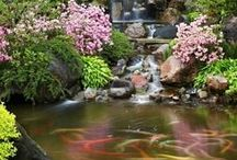 Gardens Ponds & Japanese