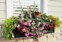window boxes / Lovely window box inspirations / by Beth Fava