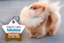 Aw Paws - Funny Pet Tags / Show off your furry friend's unique personality with a hand-crafted identification tag! www.AwPaws.com