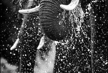 We love elephants / Elephants appearing in all sorts of ways. Which one is your favourite image?