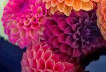 6/13/15 Centerpieces & Flowers