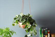växter och vaser
