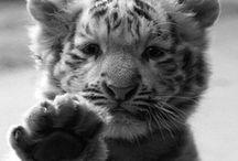 Furry Babies / Animals  / by Missy Gardiner Weeks