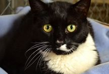 Rescue Ridge Cats / Kitties that are available at Rescue Ridge, Spring Lake, NJ.