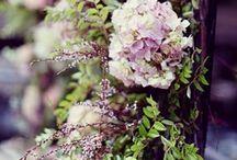 Blossoms / by Tara Wang
