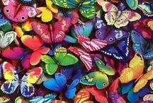 Butterflies / by Jana S