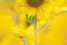 Color: Yellow / by T Hofle