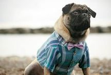 Woof!!! / Pet products that inspire me / by April McGee-Riess