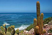 Life's a Beach / The Ocean is my Zen Zone