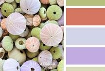 Patterns and Color Combos Galore! / by Chelsea Shearer