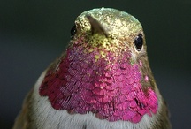 Birds / by Javiera Cifuentes