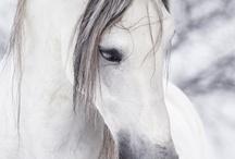 Horse Play / by < Hannah >