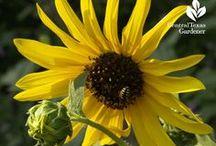 Wildlife plants / Plants for bees, butterflies, birds and other beneficial delightful creatures in the garden.