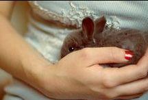 Bunny Honey / I would love a pet Rabbit.