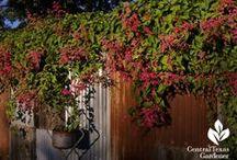 Vivacious vines