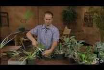 Plant Propagation / Saving seeds, dividing plants & making cuttings