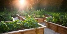 Grow Your Own / Inspiration and ideas for growing your own fruit and vegetables.