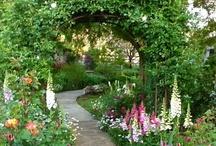 garden / by Mary Pisarcik