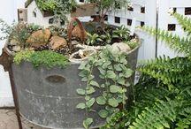 Fairy Gardens and Terrariums / by Teresa Stoll