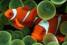 marine organism / by usagi nomedama