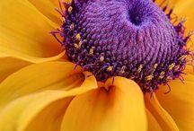 Pretty Petals / by Debbie Jones