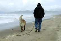 Pet Friendly Activities / by Pismo Beach - California