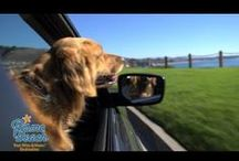 Goldie's Dog Blog - Pismo Beach / Goldie, the Classic California Canine, blogs about her favorite things to do, see and experience in Pismo Beach! / by Pismo Beach