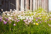 Spring / If the blooming flowers and spring showers are part of your favorite time of year, then bring the fresh feeling of spring into your home. / by Overstock