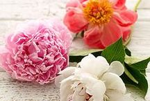 Flowers & Gardening / Flowers brighten a room any time of year! Let Family Circle inspire your floral creations!