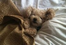 Puppy love / by Jojo