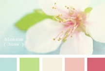 INSPIRED | Color Palettes / by Abbey Kyhl