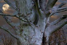 Trees are storietellers