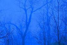~Blue~ / by Jeni Williamson