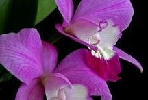 Color of Orchids / by Theresa Ayers
