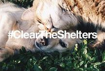 #ClearTheShelters / Overstock.com and NBCUniversal Owned Television Stations present Clear the Shelters—a nationwide pet adoption drive on August 15, 2015 to help find new homes for thousands of homeless pets. / by Overstock