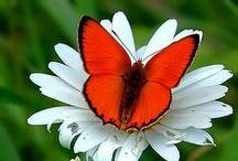 ~Butterflies~ / by Jeni Williamson