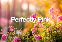 Perfectly Pink / Everything pink that is amazing! / by Overstock