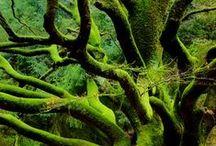 Enchanting / by Emerald