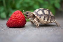 Turtle / želve