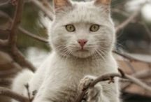 cats cats..cats / by Paola Gzz