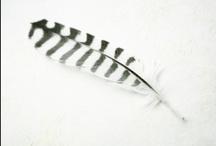 ART & DESIGN | feathers