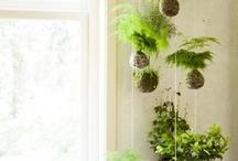 Gardens/Gardening Tips