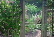 My Secret Garden / by Linda Robinson