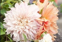 Wedding Flowers/Bouguets