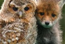 FURRY & FEATHERED / Animal cuteness overload
