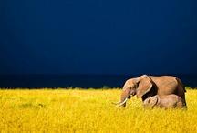 elefant <3