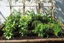 Un peu de verdure dans ce monde de béton... / Ideas for my terrace...