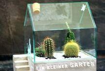 HOME: Pflanzen & Blumen
