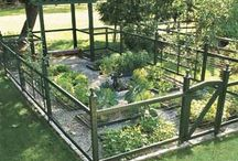 Garden Growing / Grow, vegetable, plant, container, harvest / by Kim Thompson