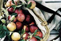 Autumn / Fall, season, color, trees, apple picking, autumn leaves,  / by Kim Thompson